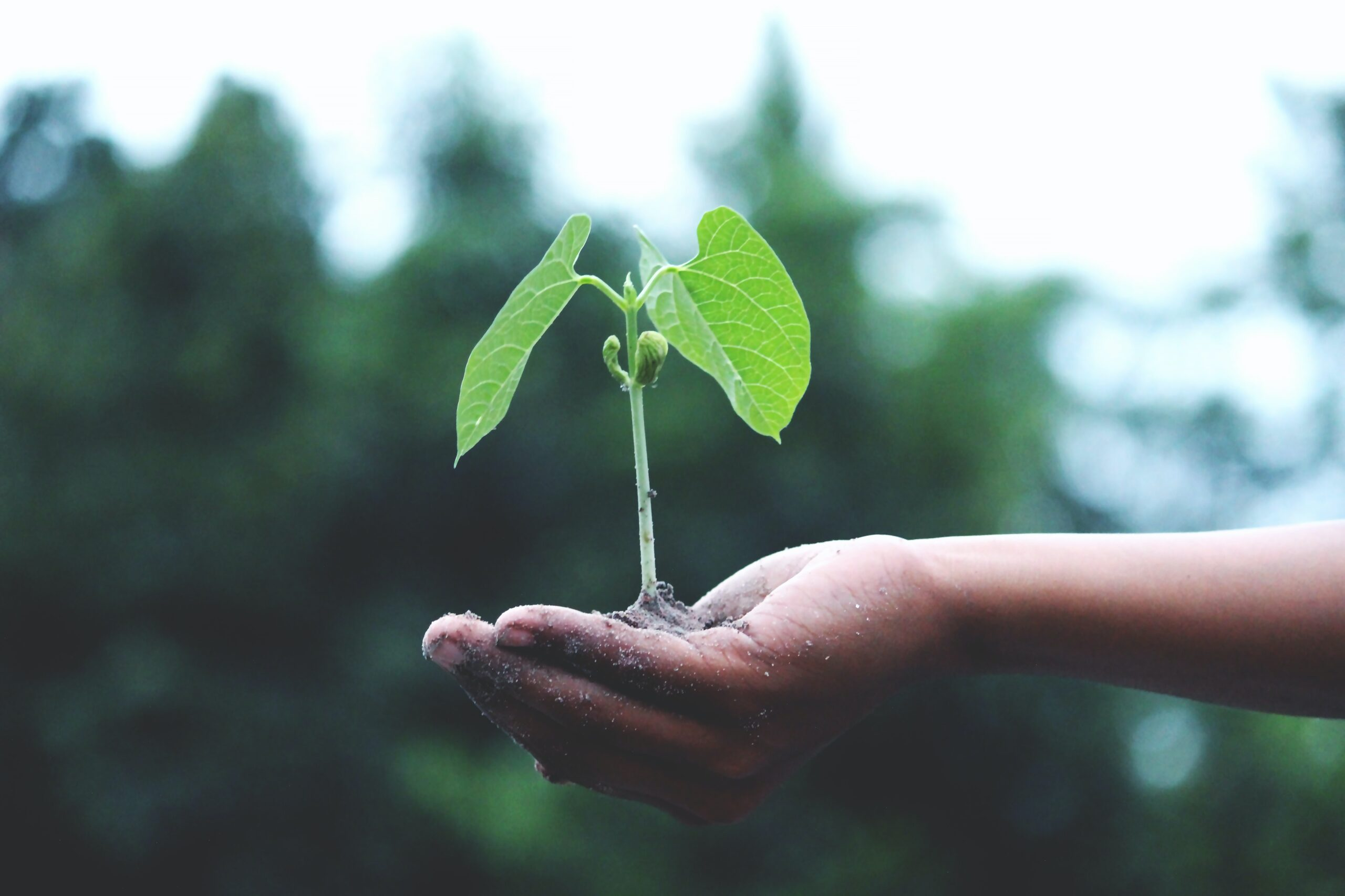 Plant Seeds of Growth in Your Community